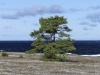 2017-10-05 Gotland-Gotland LNI0707