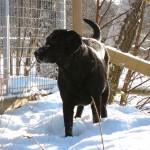 Selma älskar snön