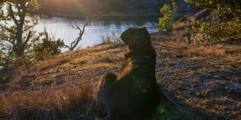 Selma ser solen gå ner över trädtopparna
